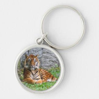 El gato de tigre raya arte del animal del modelo d llavero redondo plateado