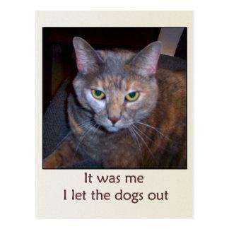 El gato dejó los perros hacia fuera postal