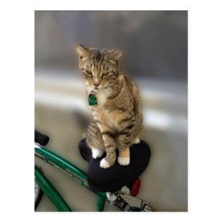 El gato del gatito quiere ir a Biking Tarjetas Postales