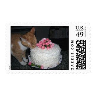el gato del sello come el pastel de bodas