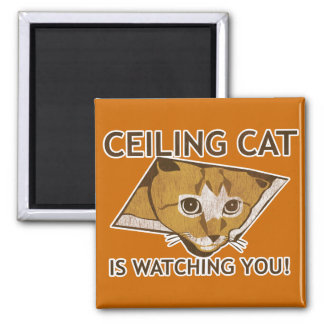 ¡El gato del techo le está mirando Imán De Nevera