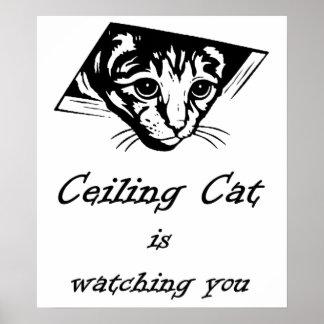 El gato del techo le está mirando póster