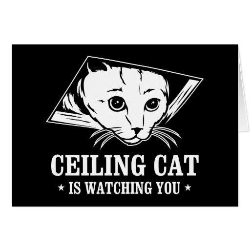 El gato del techo le está mirando tarjetas