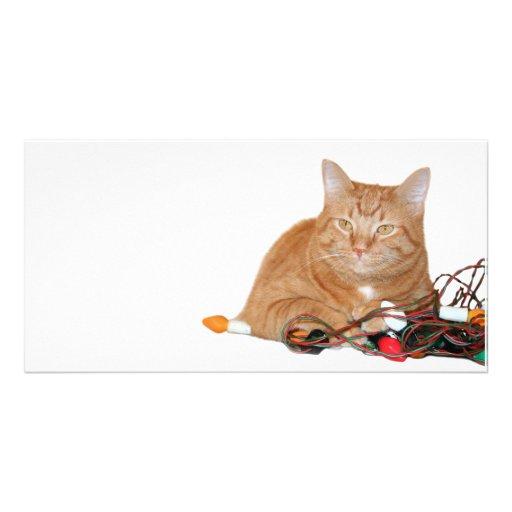El gato demanda luces de navidad tarjetas fotográficas