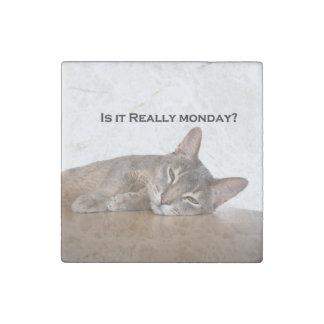 El gato divertido de Brown del abisinio odia lunes Imán De Piedra