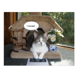 El gato divertido movió la nueva dirección postales