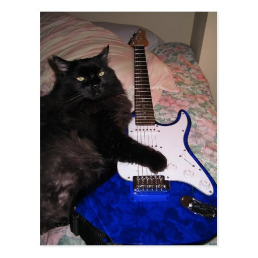 El gato en postal negra de la guitarra