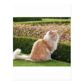 El gato en Wimpole Pasillo Cambs Postal