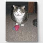 El gato gordo gruñón no se divierte placas de madera