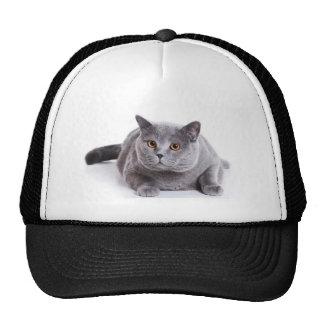 el gato gorro