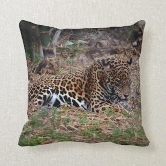 el gato grande del jaguar que lame las patas cojín