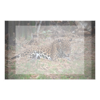 el gato grande del jaguar que lame las patas refre