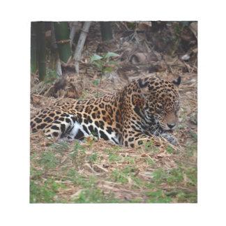 el gato grande del jaguar que lame las patas refre bloc