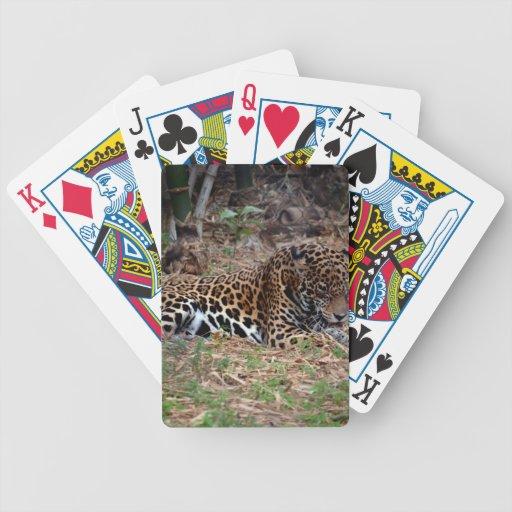 el gato grande del jaguar que lame las patas refre barajas de cartas