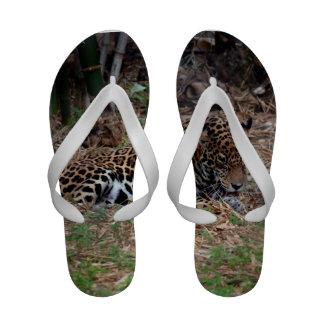 el gato grande del jaguar que lame las patas refre sandalias de playa
