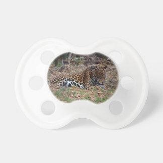 el gato grande del jaguar que lame las patas refre chupetes de bebe