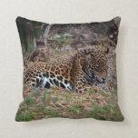 el gato grande del jaguar que lame las patas refre cojines