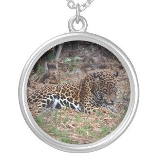el gato grande del jaguar que lame las patas refre collar