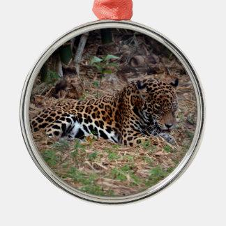 el gato grande del jaguar que lame las patas refre ornamento de reyes magos