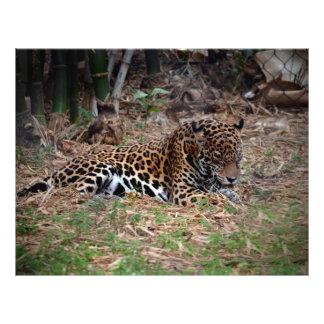el gato grande del jaguar que lame las patas refre flyer personalizado