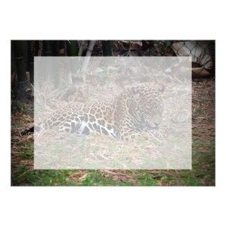 el gato grande del jaguar que lame las patas refre anuncio