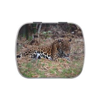 el gato grande del jaguar que lame las patas refre jarrones de dulces
