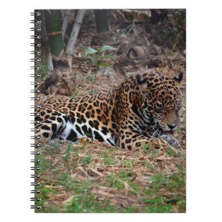 el gato grande del jaguar que lame las patas refre libretas espirales