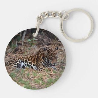 el gato grande del jaguar que lame las patas refre llavero