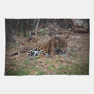 el gato grande del jaguar que lame las patas refre toallas de cocina