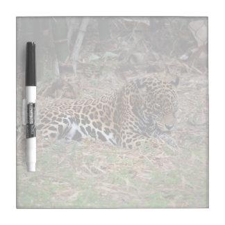 el gato grande del jaguar que lame las patas refre pizarras