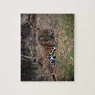 el gato grande del jaguar que lame las patas refre puzzle con fotos
