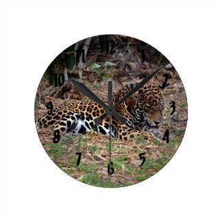 el gato grande del jaguar que lame las patas refre relojes