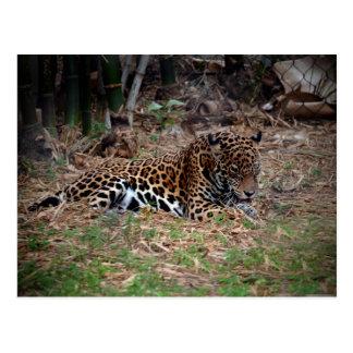el gato grande del jaguar que lame las patas refre postal