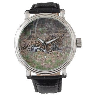el gato grande del jaguar que lame las patas relojes de pulsera