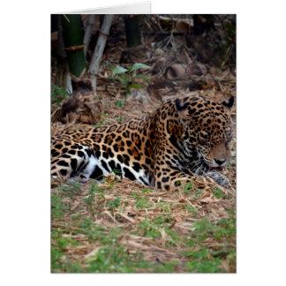 el gato grande del jaguar que lame las patas tarjeta de felicitación