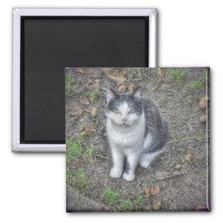 el gato imán cuadrado