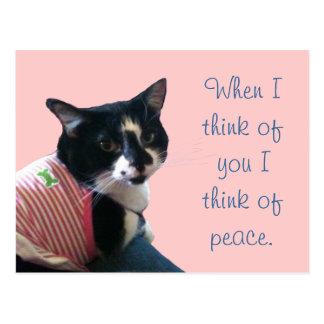 El gato lindo del smoking piensa en las postales d