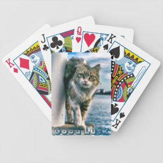 El gato lindo trae naipes del póker de la buena barajas