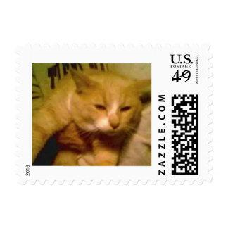 El gato más lindo en el mundo sello