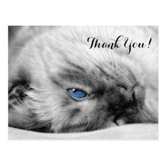 El gato observado azul siamés le agradece postales