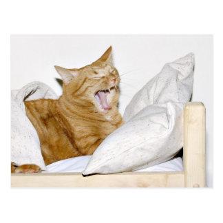 El gato odia mañanas postal
