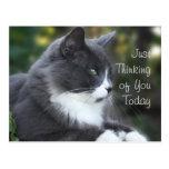 El gato que piensa en usted carda o cualquier tarjeta postal