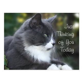 El gato que piensa en usted carda o cualquier postal