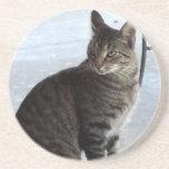 El gato rayado perdido quiere la fotografía del am posavasos cerveza