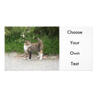 """El gato """"rojo"""" está enojado tarjetas fotograficas"""