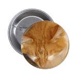 El gato rojo soñoliento está durmiendo finalmente  pin