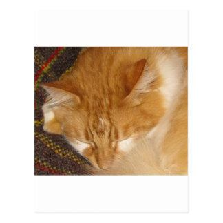 El gato rojo soñoliento está durmiendo finalmente postal