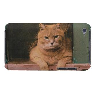 El gato se inclina en Windowsill iPod Touch Carcasa