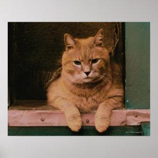 El gato se inclina en Windowsill Poster