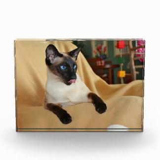 El gato siamés del punto cómico del sello que lo